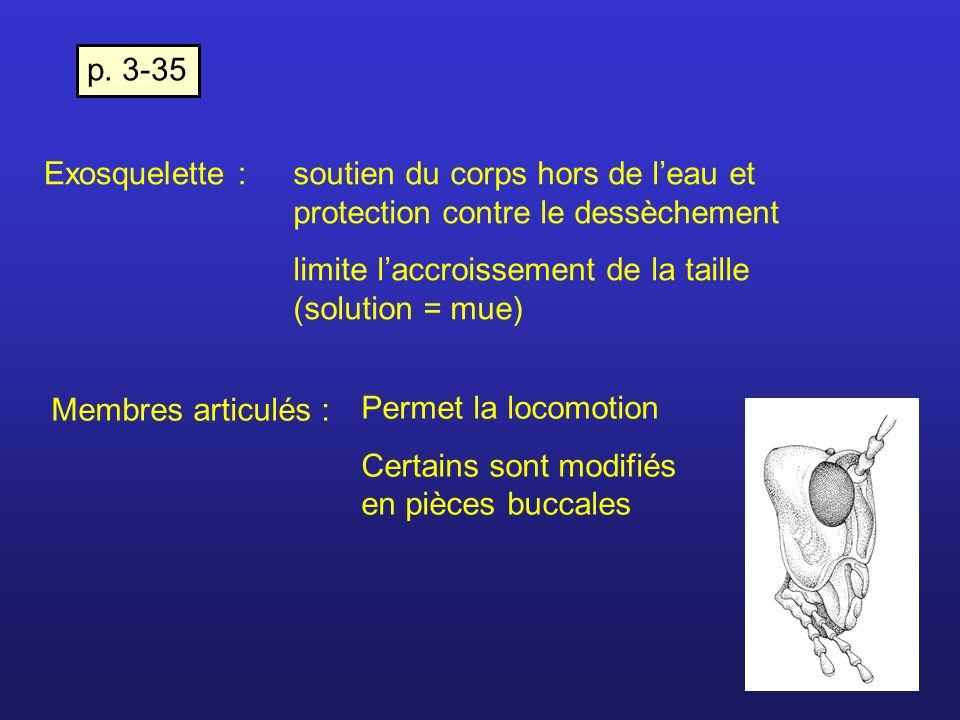 p. 3-35 Exosquelette : soutien du corps hors de l'eau et protection contre le dessèchement. limite l'accroissement de la taille (solution = mue)