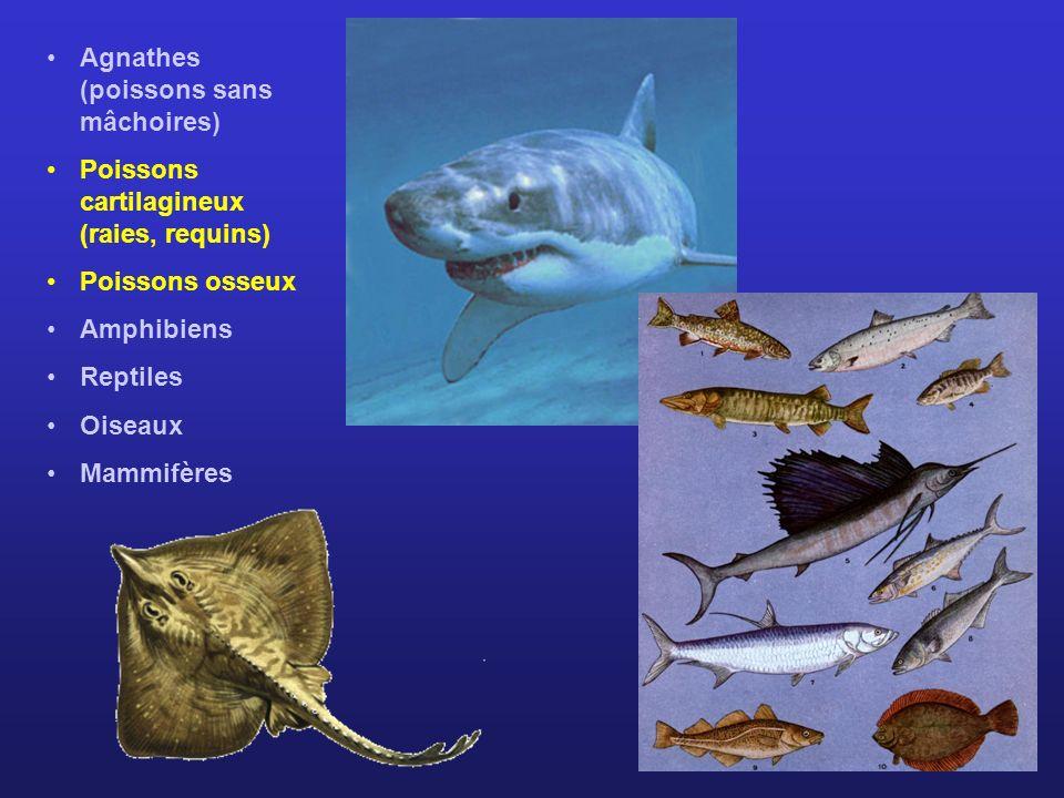 Agnathes (poissons sans mâchoires)