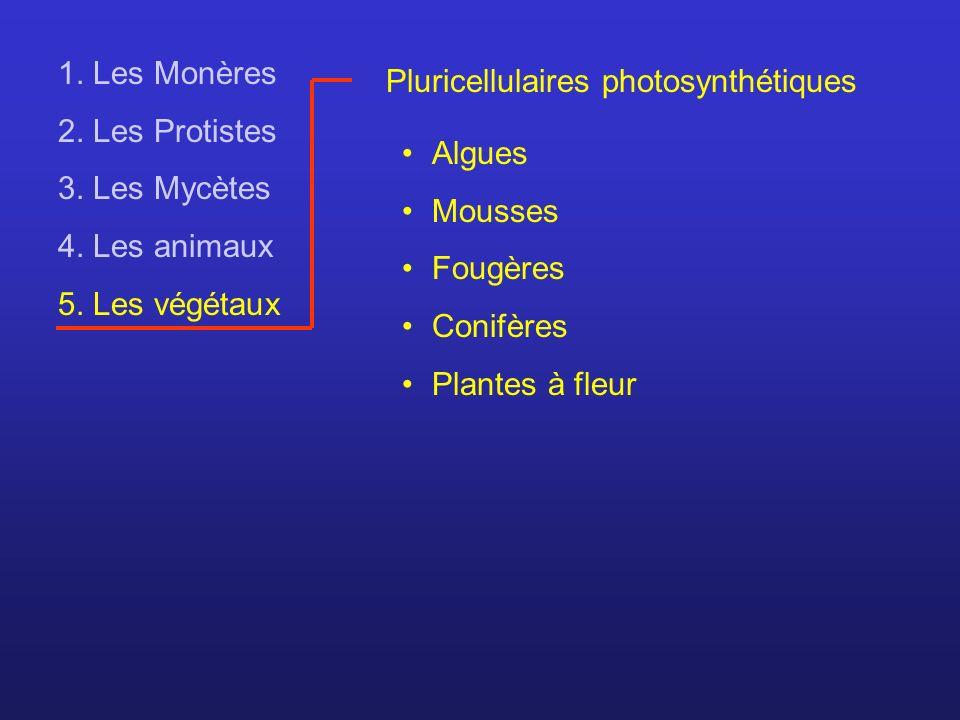 1. Les Monères 2. Les Protistes. 3. Les Mycètes. 4. Les animaux. 5. Les végétaux. Pluricellulaires photosynthétiques.