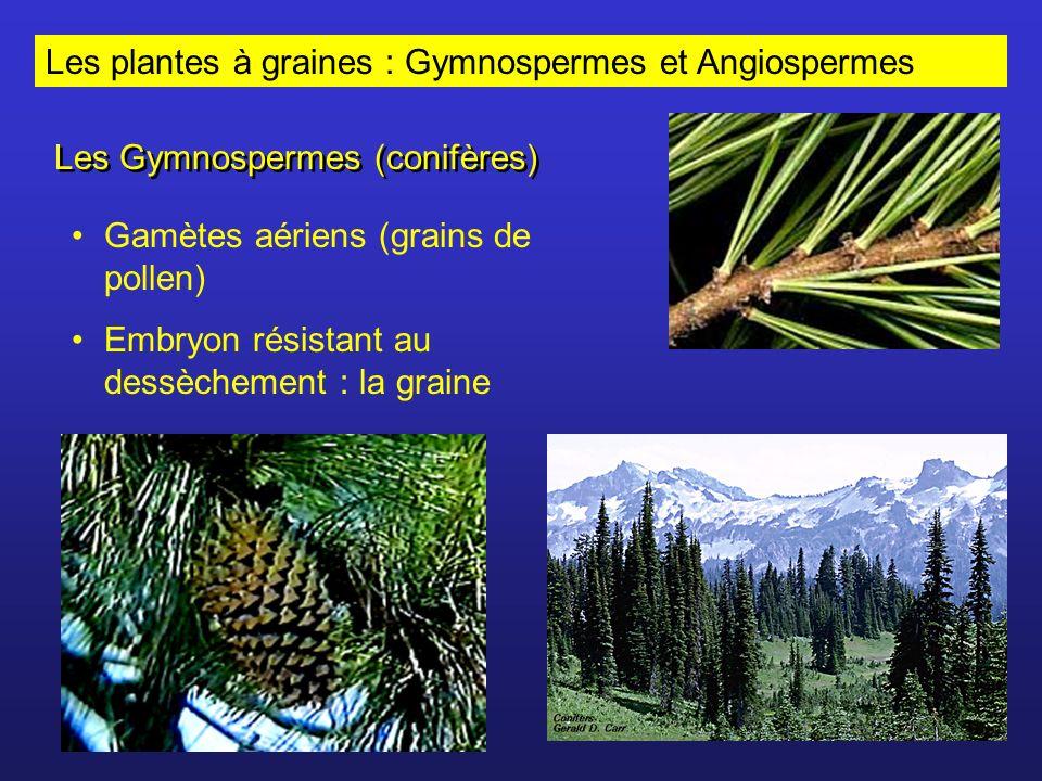 Les plantes à graines : Gymnospermes et Angiospermes