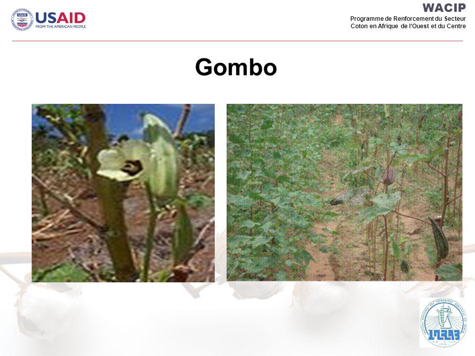 WACIP Programme de Renforcement du Secteur Coton en Afrique de l'Ouest et du Centre Gombo