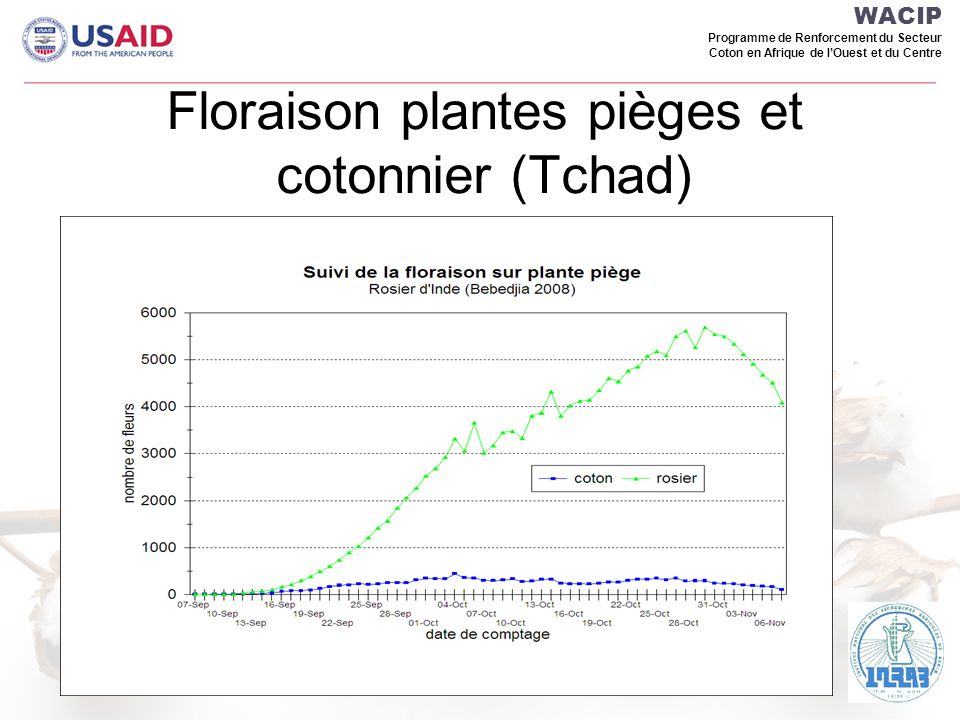 Floraison plantes pièges et cotonnier (Tchad)