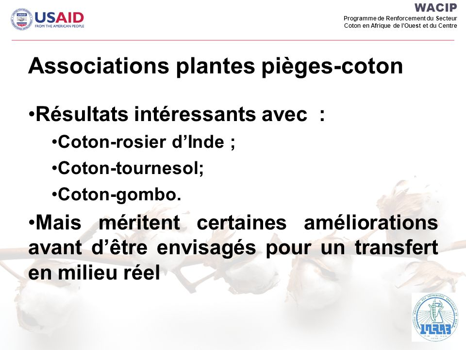 Associations plantes pièges-coton