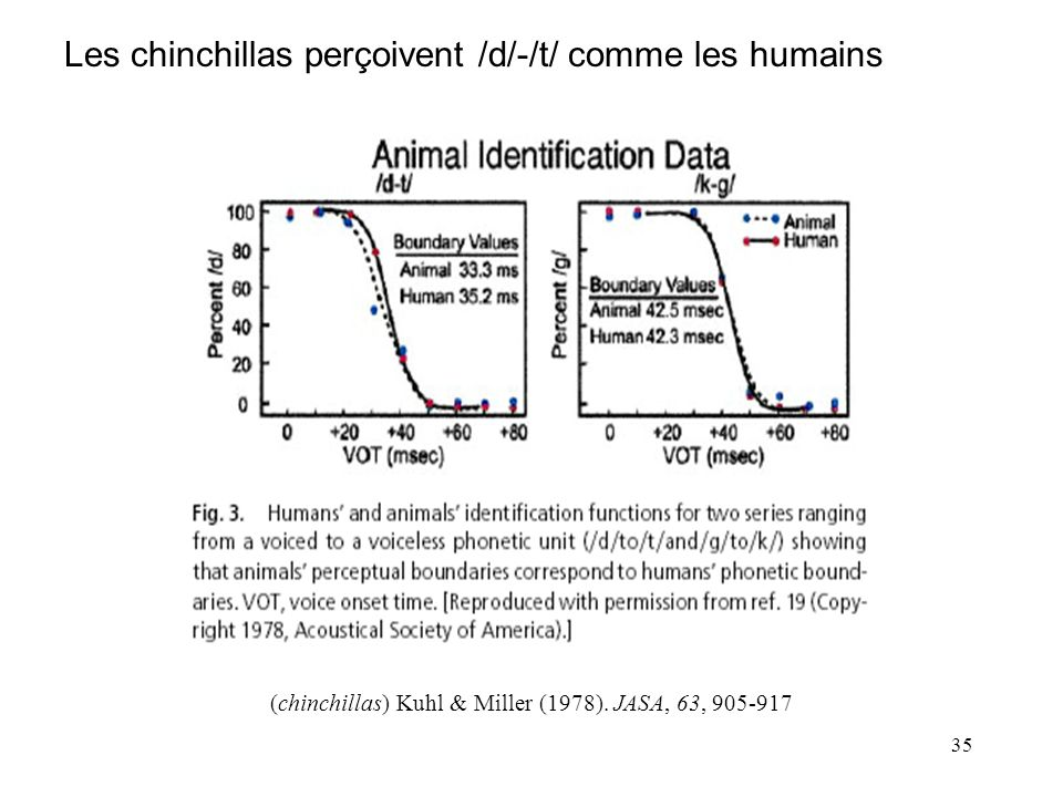 (chinchillas) Kuhl & Miller (1978). JASA, 63, 905-917