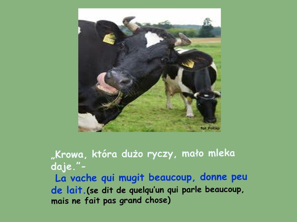 """""""Krowa, która dużo ryczy, mało mleka daje. -"""