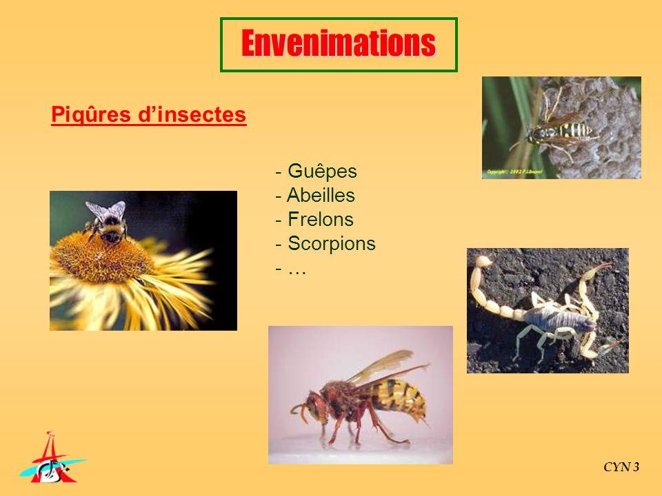 Envenimations Piqûres d'insectes Guêpes Abeilles Frelons Scorpions …