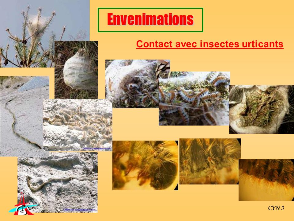 Contact avec insectes urticants