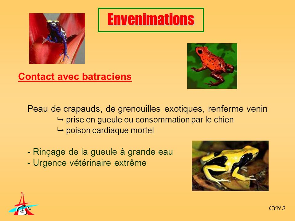 Contact avec batraciens