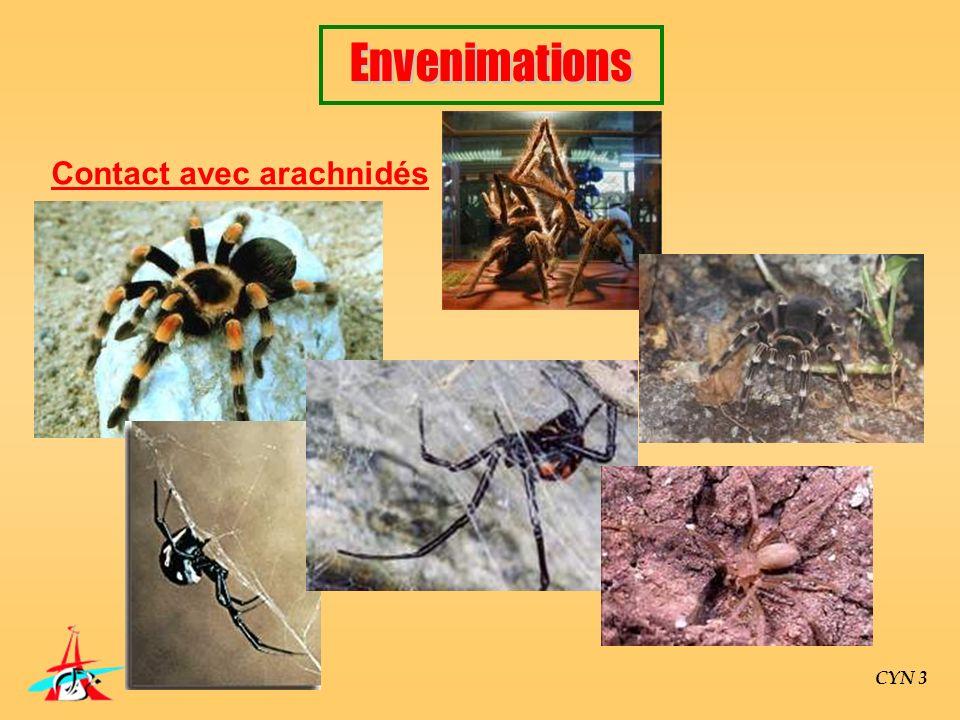Contact avec arachnidés