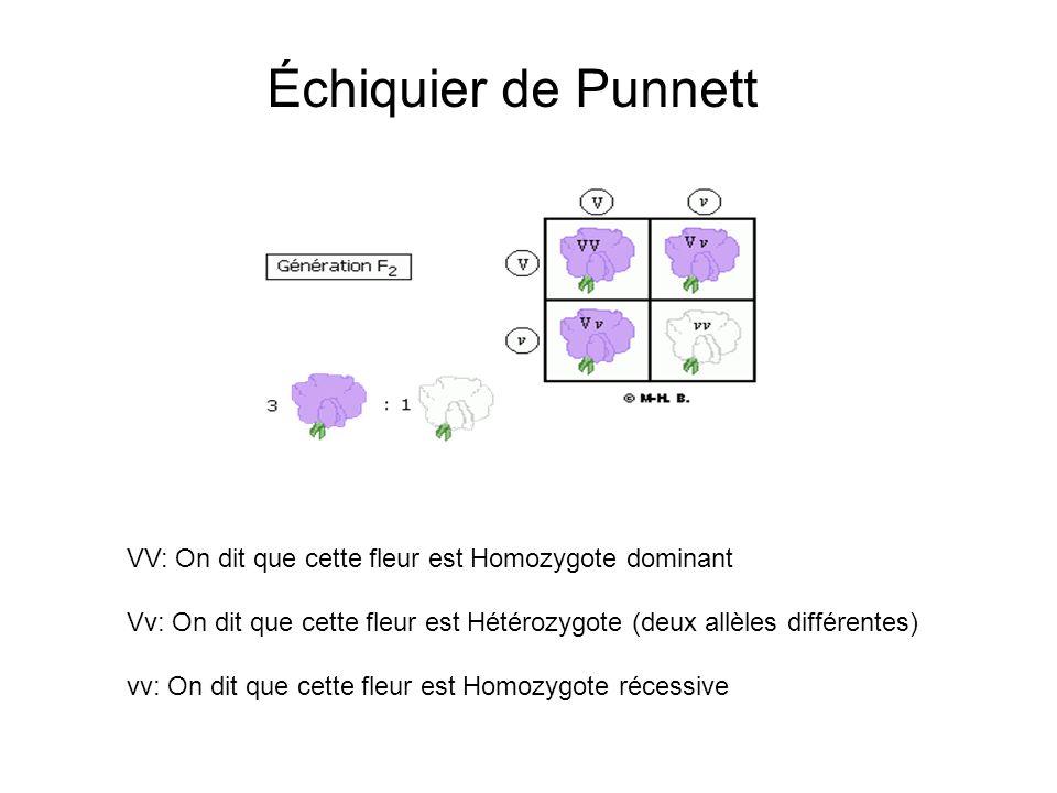 Échiquier de Punnett VV: On dit que cette fleur est Homozygote dominant. Vv: On dit que cette fleur est Hétérozygote (deux allèles différentes)