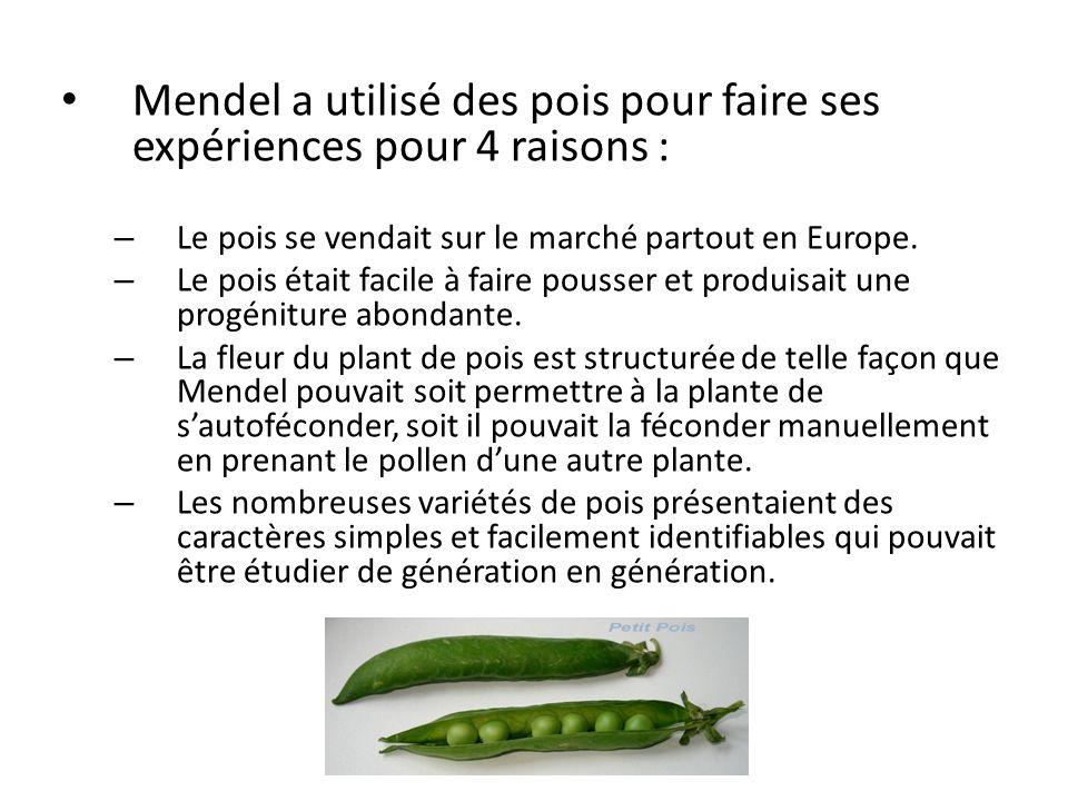 Mendel a utilisé des pois pour faire ses expériences pour 4 raisons :