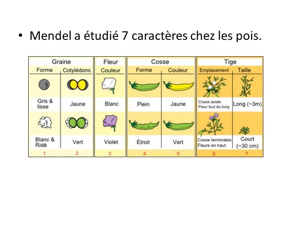 Mendel a étudié 7 caractères chez les pois.