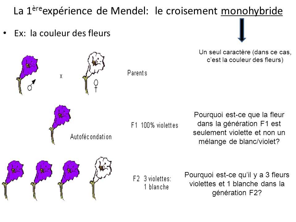 La 1èreexpérience de Mendel: le croisement monohybride