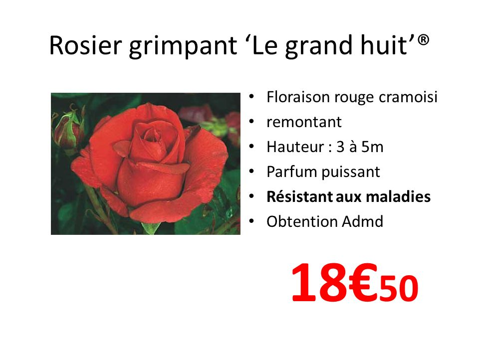 Rosier grimpant 'Le grand huit'®