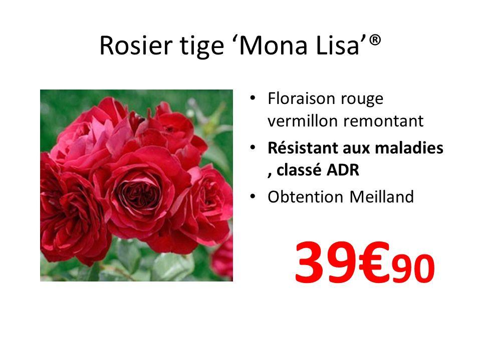 Rosier tige 'Mona Lisa'®