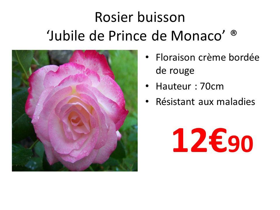Rosier buisson 'Jubile de Prince de Monaco' ®
