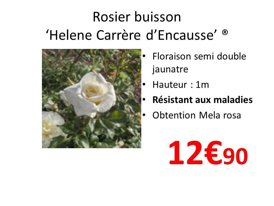 Rosier buisson 'Helene Carrère d'Encausse' ®