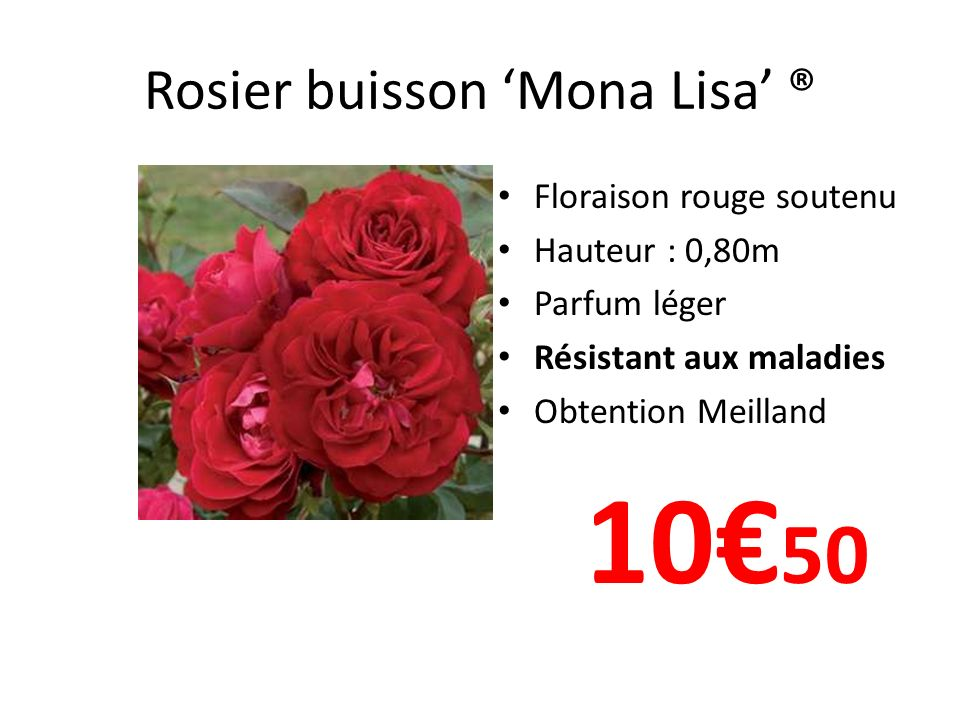 Rosier buisson 'Mona Lisa' ®