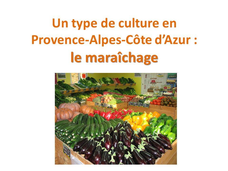 Un type de culture en Provence-Alpes-Côte d'Azur : le maraîchage