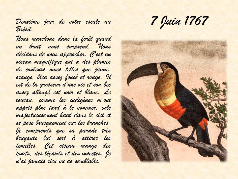 7 Juin 1767 Deuxième jour de notre escale au Brésil.