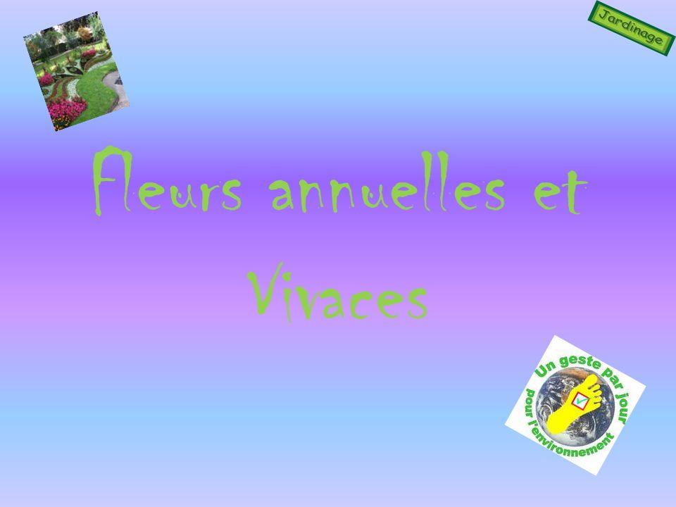 Fleurs annuelles et Vivaces