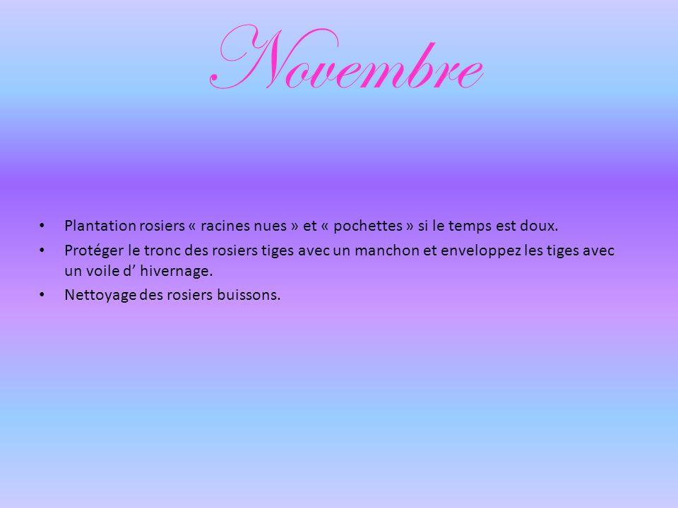 Novembre Plantation rosiers « racines nues » et « pochettes » si le temps est doux.