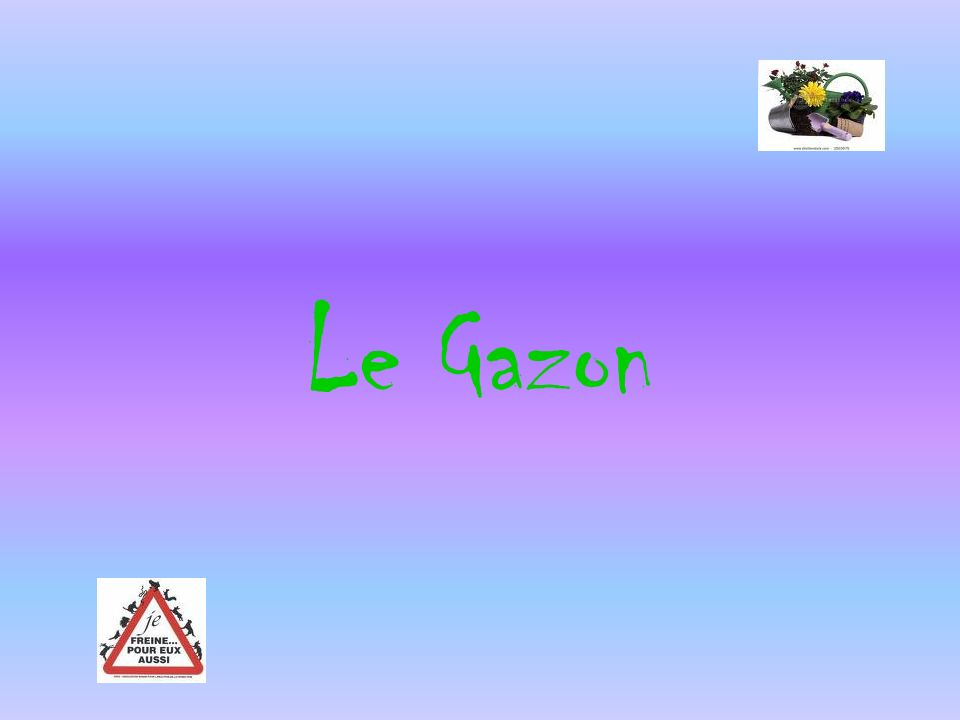 Le Gazon