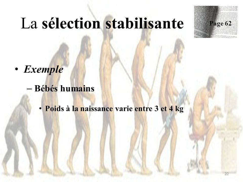 La sélection stabilisante