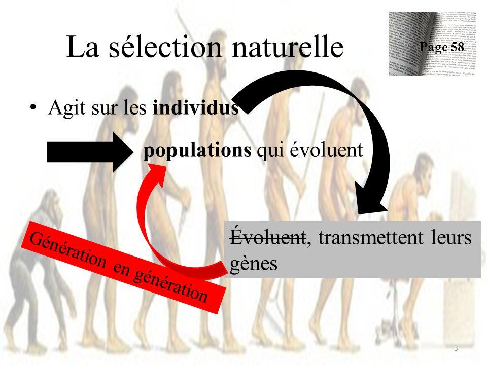 La sélection naturelle