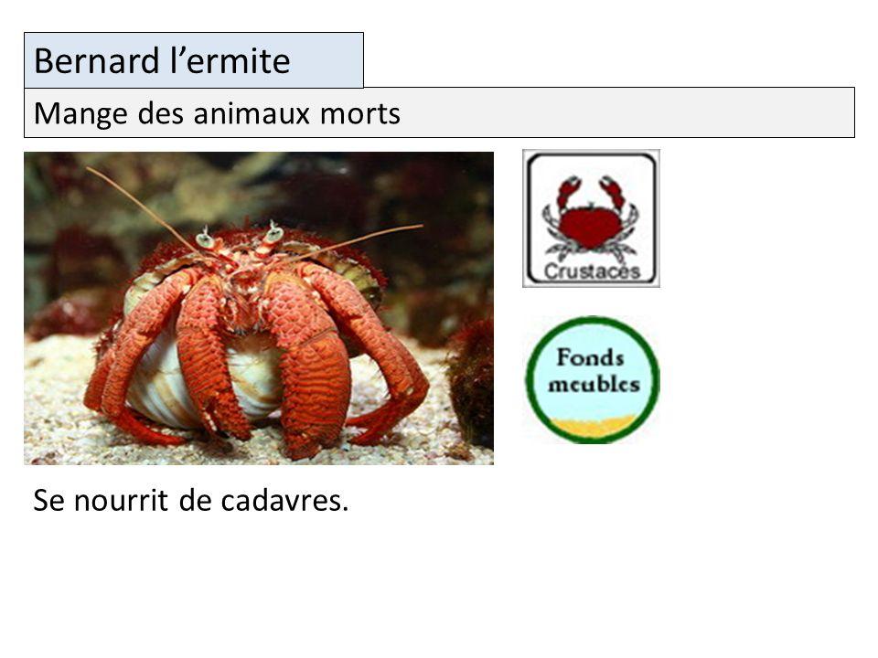 Bernard l'ermite Mange des animaux morts Se nourrit de cadavres.