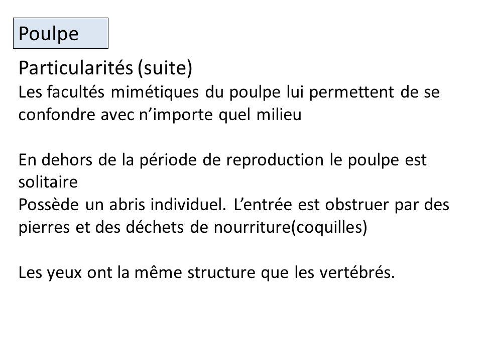 Particularités (suite)