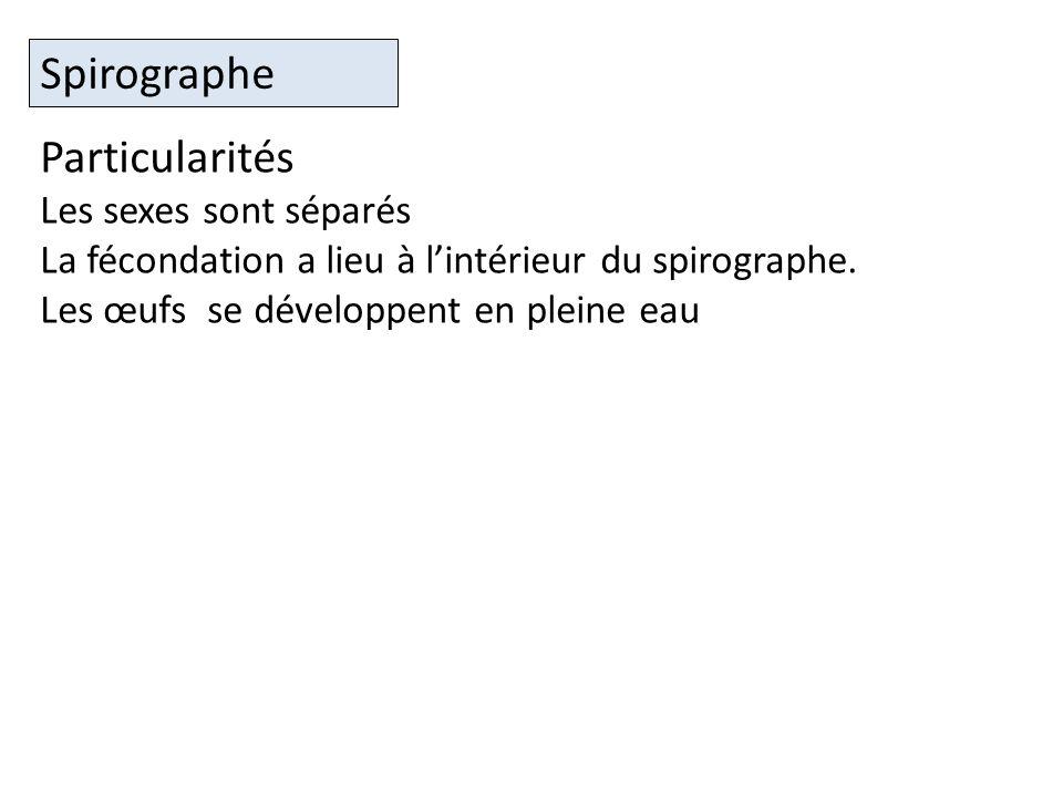 Spirographe Particularités