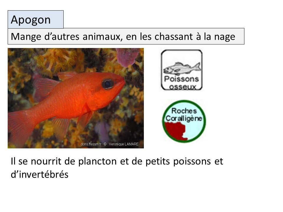 Apogon Mange d'autres animaux, en les chassant à la nage