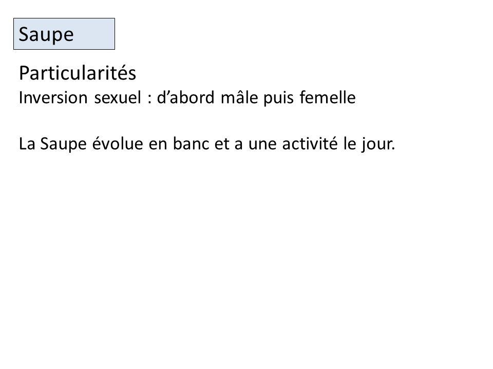 Saupe Particularités Inversion sexuel : d'abord mâle puis femelle