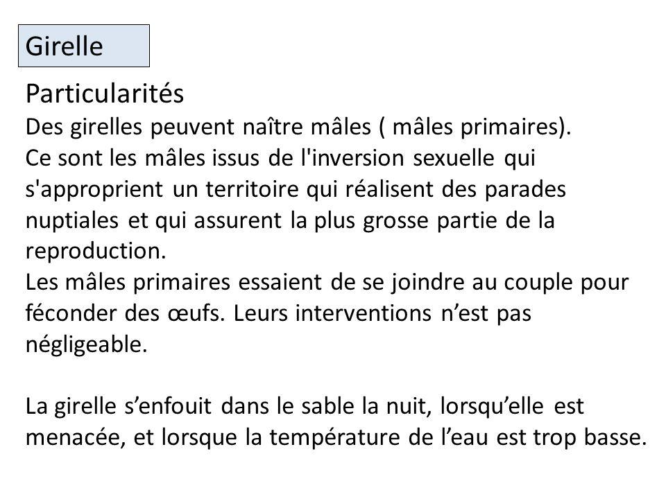 Particularités Des girelles peuvent naître mâles ( mâles primaires).
