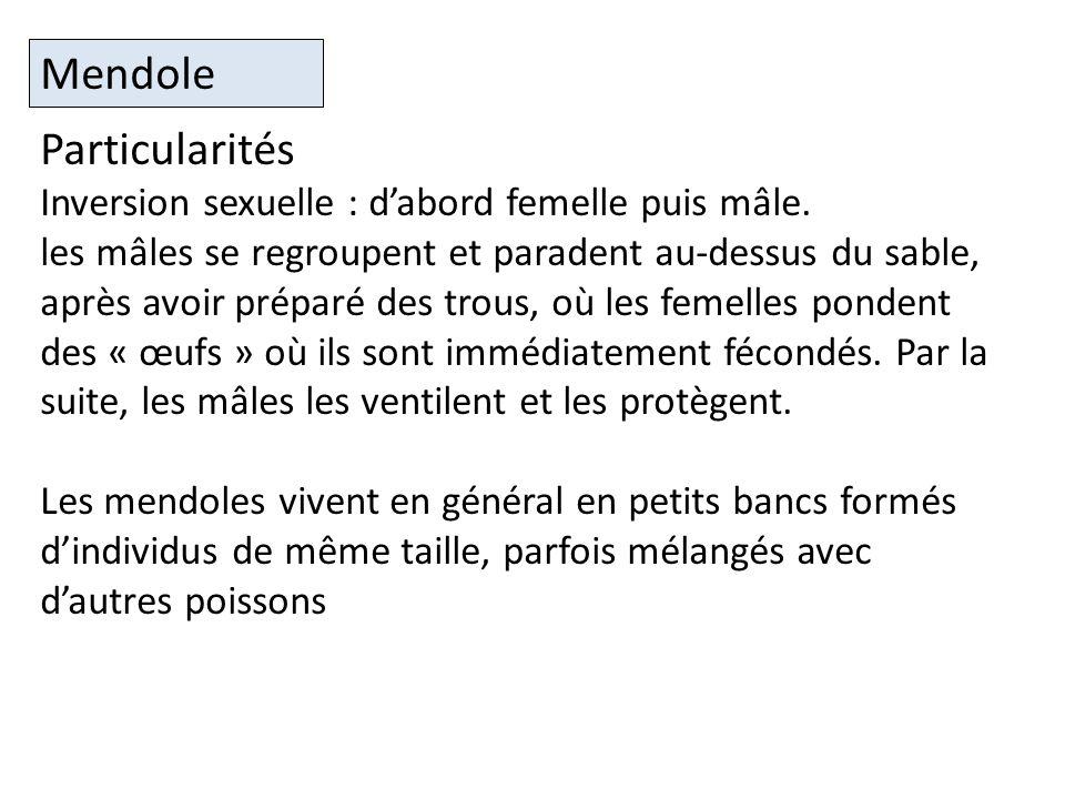 Mendole Particularités Inversion sexuelle : d'abord femelle puis mâle.
