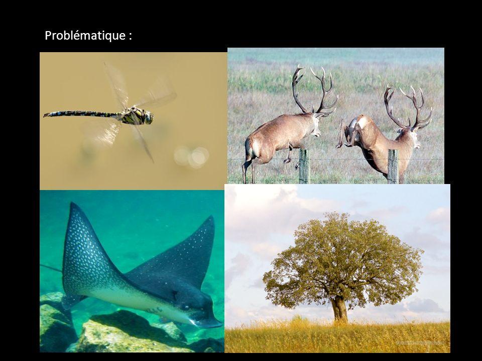 Problématique : Points communs aux espèces animales = déplacement