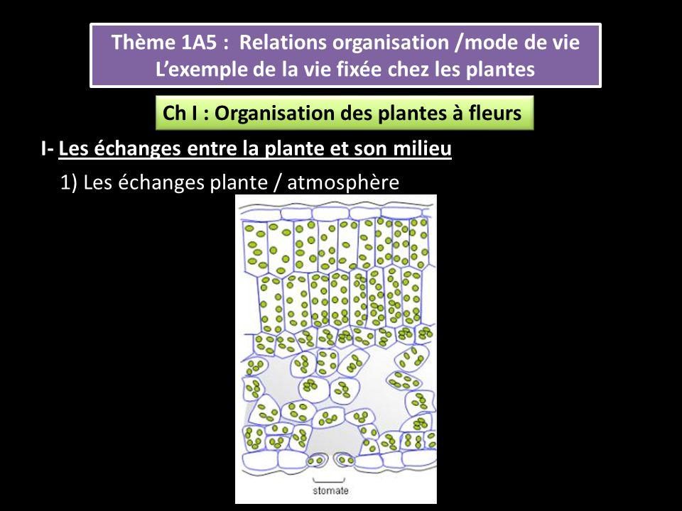 Thème 1A5 : Relations organisation /mode de vie