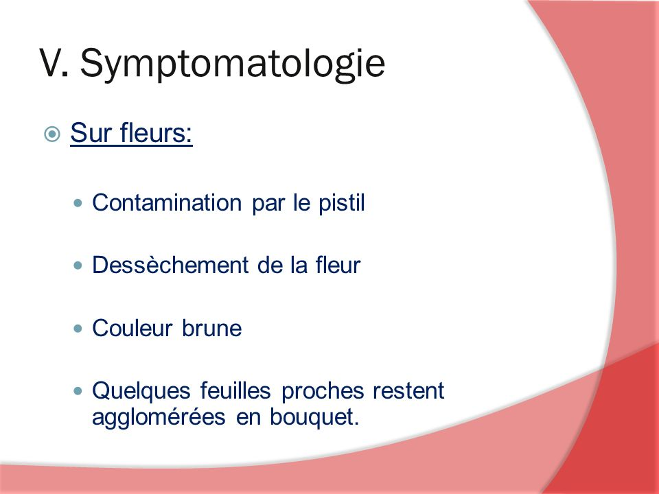 V. Symptomatologie Sur fleurs: Contamination par le pistil