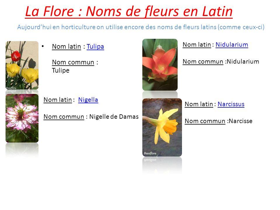 La Flore : Noms de fleurs en Latin