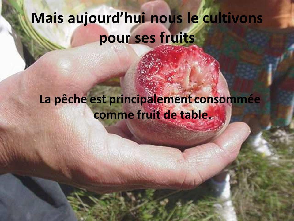 Mais aujourd'hui nous le cultivons pour ses fruits