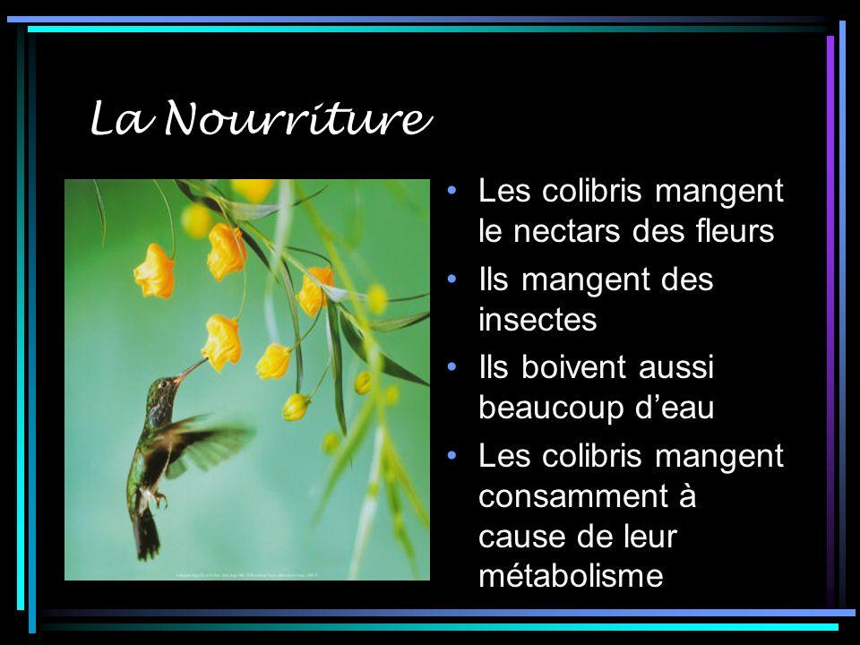 La Nourriture Les colibris mangent le nectars des fleurs