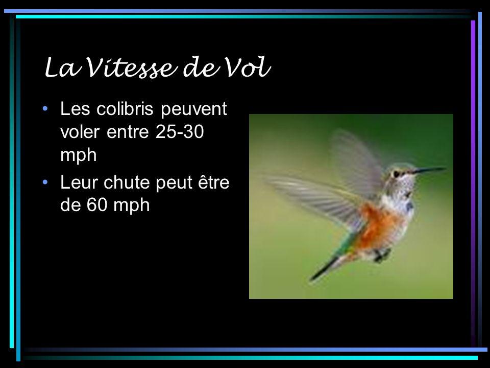 La Vitesse de Vol Les colibris peuvent voler entre 25-30 mph