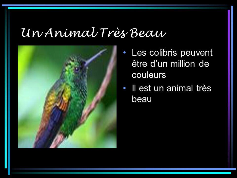 Un Animal Très Beau Les colibris peuvent être d'un million de couleurs