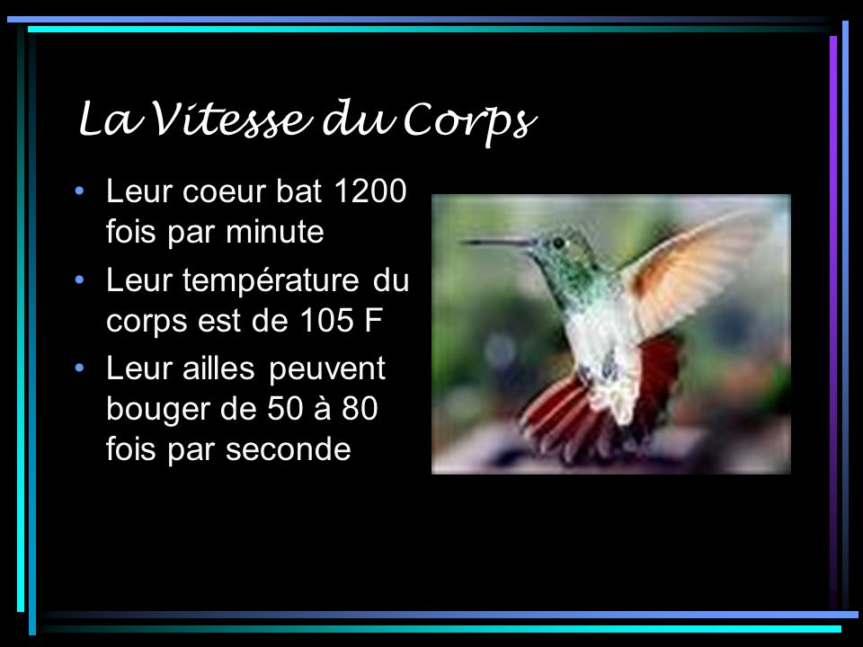 La Vitesse du Corps Leur coeur bat 1200 fois par minute