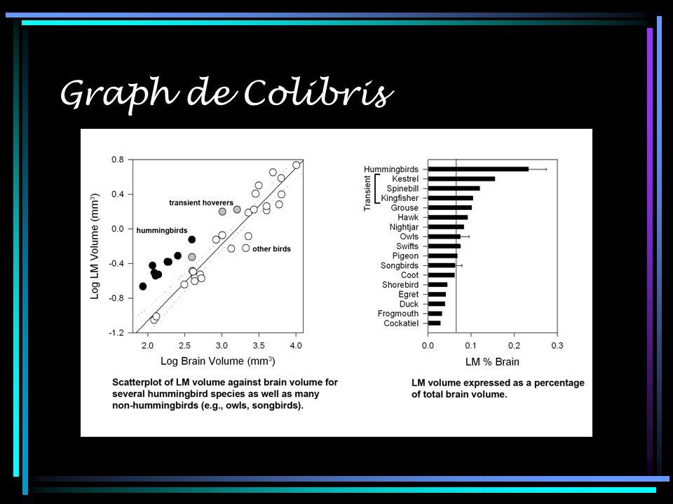 Graph de Colibris