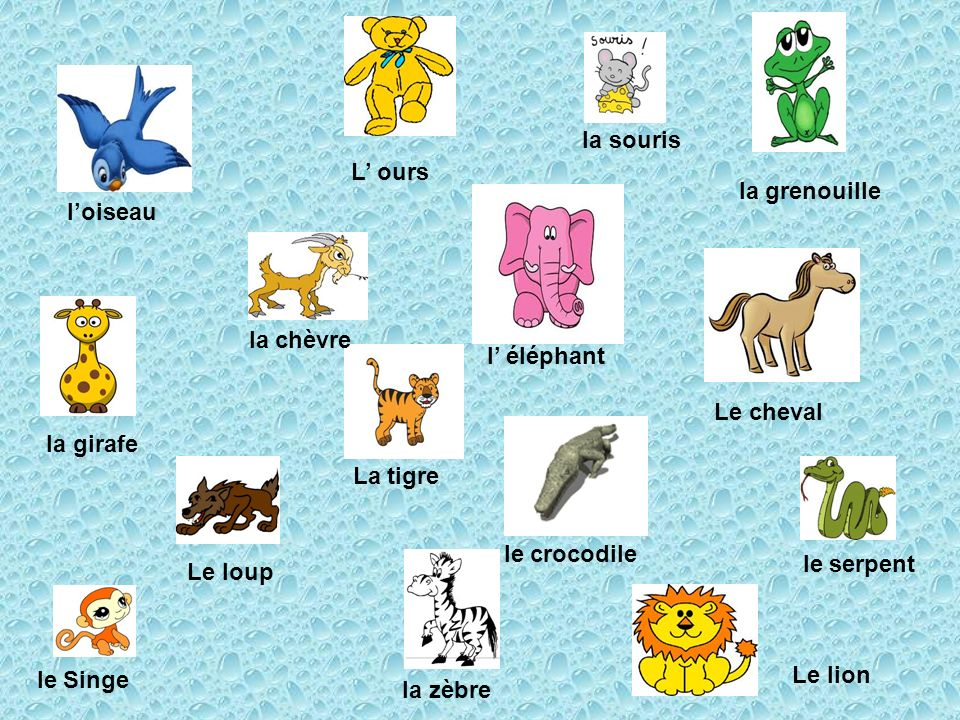 la souris L' ours. la grenouille. l'oiseau. la chèvre. l' éléphant. Le cheval. la girafe. La tigre.