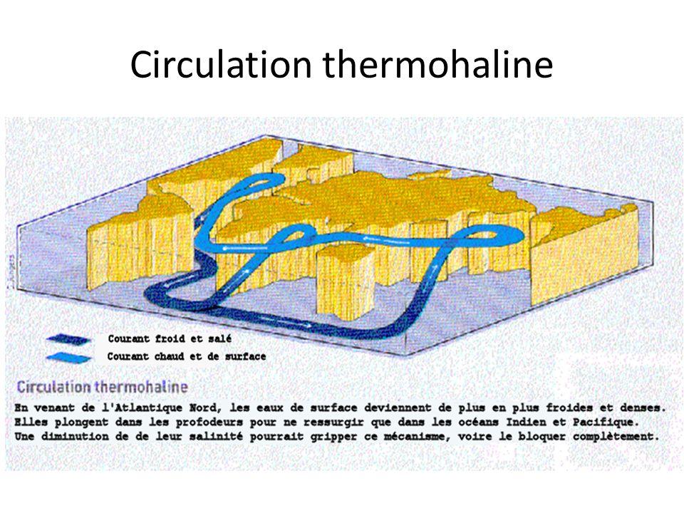 Circulation thermohaline