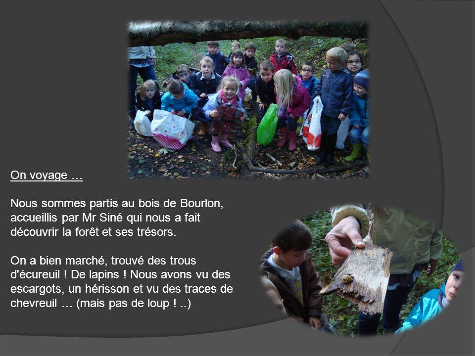 On voyage … Nous sommes partis au bois de Bourlon, accueillis par Mr Siné qui nous a fait découvrir la forêt et ses trésors.