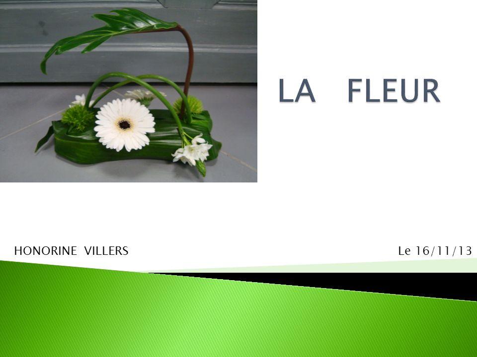 LA FLEUR HONORINE VILLERS Le 16/11/13